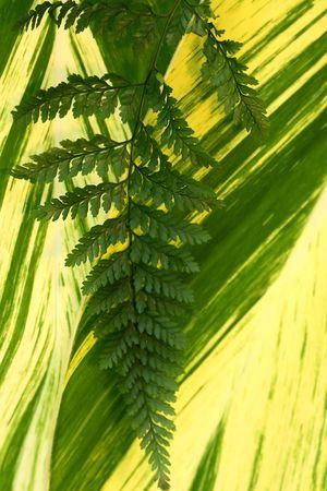 Diferentes tipos de hojas verdes Foto de archivo - 3696055