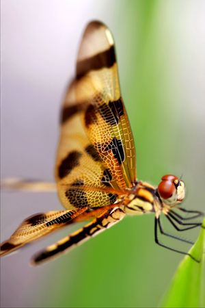 Brown dragonfly close up Stock Photo - 5274691
