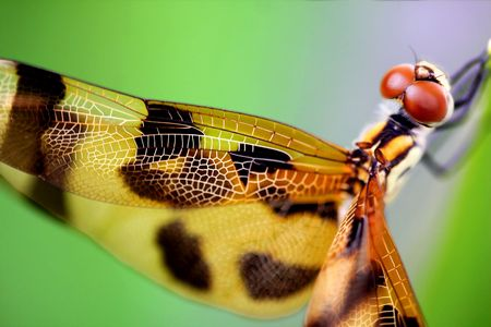 Beautiful brown dragonfly close up