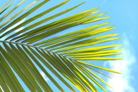 Green palm leaf on a blue sky Stock Photo