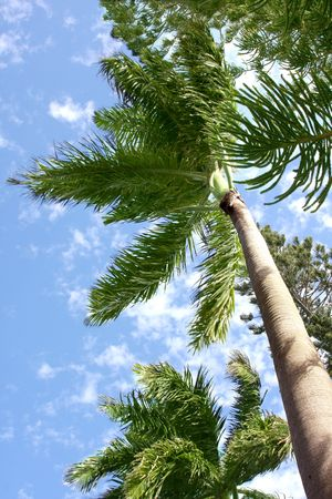 Palm tree over blue tropical sky Stock Photo