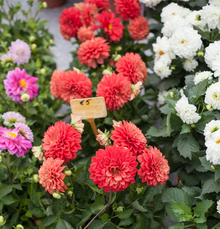 sell: Beautiful flowers selling at flower market Kouter in Ghent Stock Photo