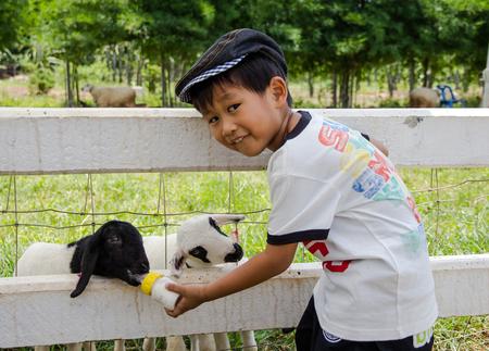 Asian boy feeding milk to lamb