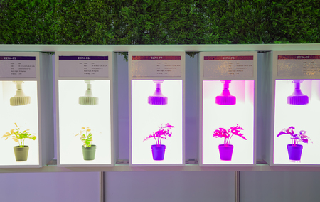 Variety specification of artificial LED lighting for growing plant in indoor agriculture Editöryel