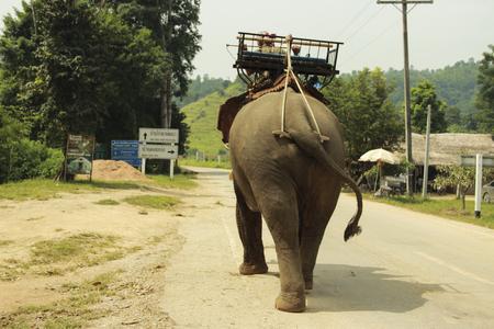 chiangrai: Elephant in chiangrai thailand
