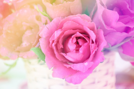 filtered: beautiful rose flowers with Soft Focus Color Filtered background