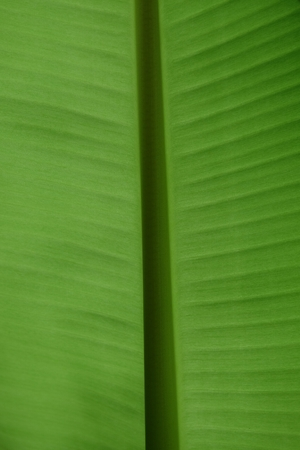 droop: Background green leaf.