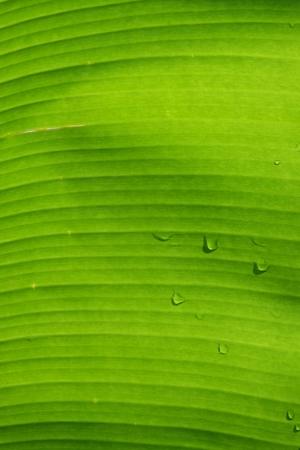 dejected: Background green leaf.