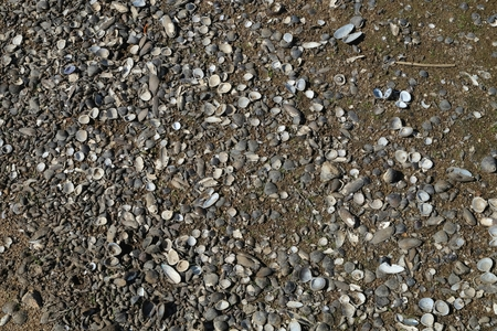 leavings: Surfaces commonly found along river shores.
