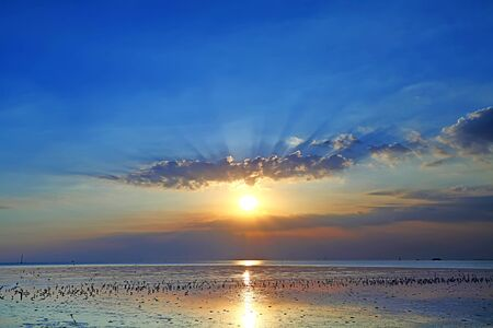 When the water decreases in the sea with a flock of seagulls standing on the sand in during the sunset Reklamní fotografie