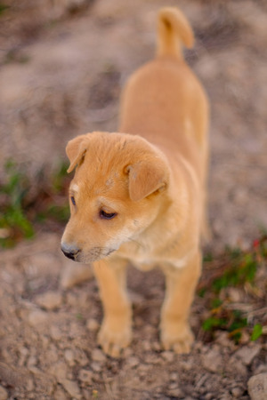 cute young dog action in the field