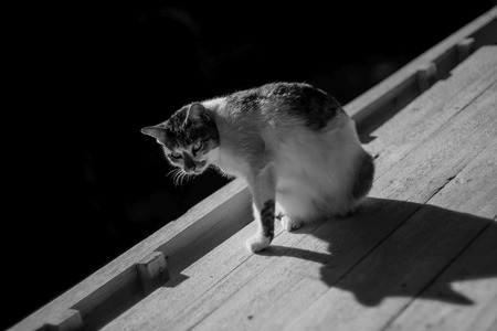 Adorable black and white cat  sunbathing on the table near balcony in black and white