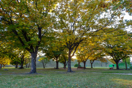 2017 People relaxing in autumn of Silla Dinasty Tumuli Park.