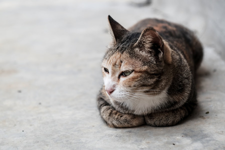 A domestic cat is laying  on cement floor