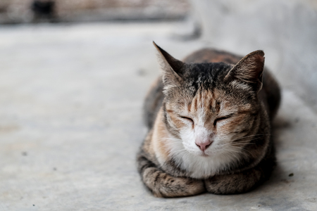 A domestic cat is laying and  sleep on cement floor