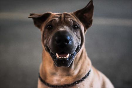 Head shot of faithful dog with deep expressive eyes. selective focus Фото со стока