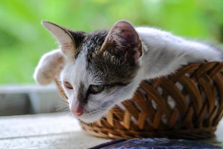 Adorable little kitten in bamboo basket on green blur bokeh background Фото со стока