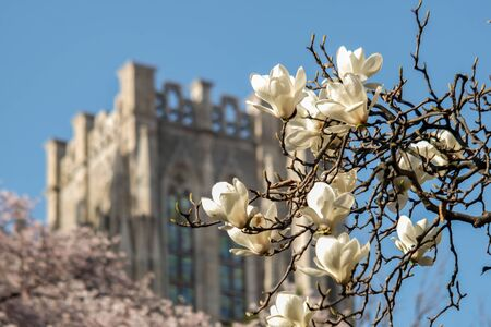Spring season  at Kyung Hee University, a popular tourist attraction and famous University of South Korea.