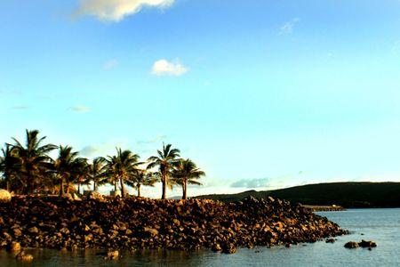 palm trees on Hamilton Island on the air runway Stock Photo