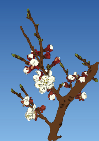 appletree: Blossoming Apple-tree branch against the sky