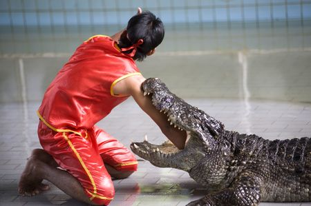 Crocodile show in Thailand photo