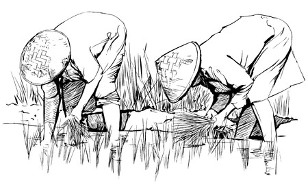 an hand drawing: Two women harvesting rice in asia Stok Fotoğraf