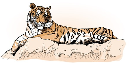 a tiger laying on a rock (hand drawing)  photo