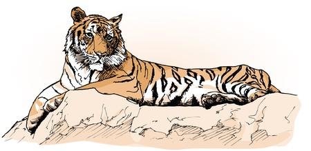 rock hand: una tigre, che su una roccia (disegno a mano)