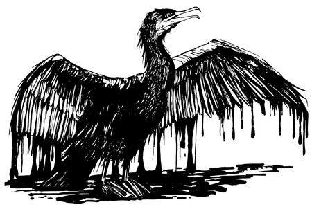 oiled: an oiled cormorant (hand drawing)