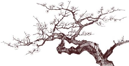 Vector illustration d'un arbre en fleurs de cerisier (dessin encré) Vecteurs
