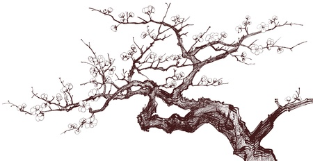 Vector illustration of a Blossoming Cherry Tree (inked drawing) Vector