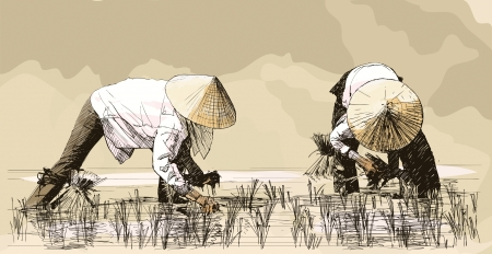Vector illustration of an hand drawing - Two women harvesting rice in asia Çizim