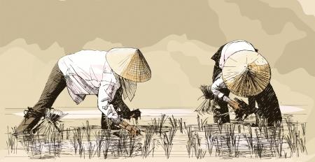 arrozal: Vector ilustraci�n de un dibujo a mano - Dos mujeres de arroz de cosecha en Asia