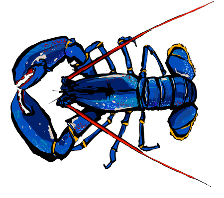 pincer: Lobster isolated on a white background - vector illustration