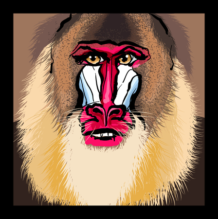 Portrait of a mandrill primate vector illustration Imagens - 96518936