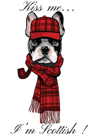 Buldog francés con una gorra escocesa y una pipa - ilustración vectorial