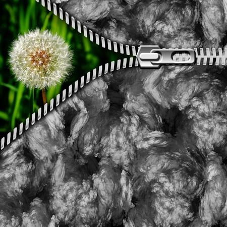 contamination: dandelion in environmental contamination
