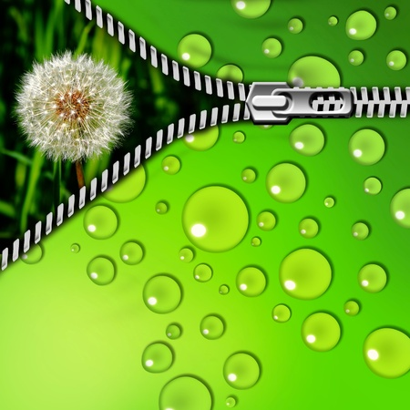 fastening: dandelion in the grass and zipper