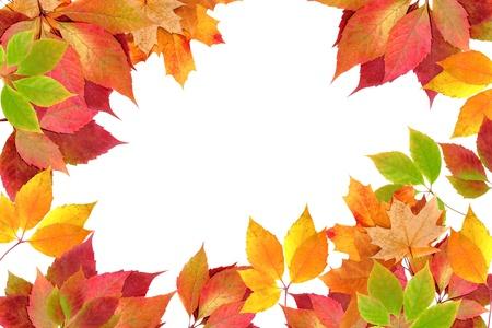 autumn leaves Stock Photo - 11088997