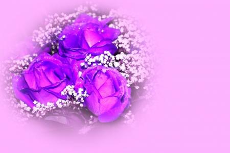 rose postcard photo