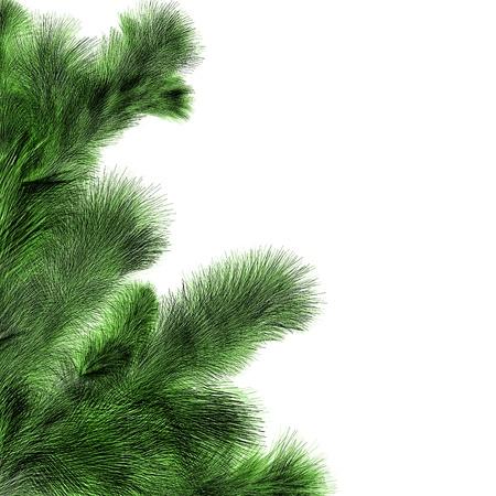 fir twig: christmas fir twig