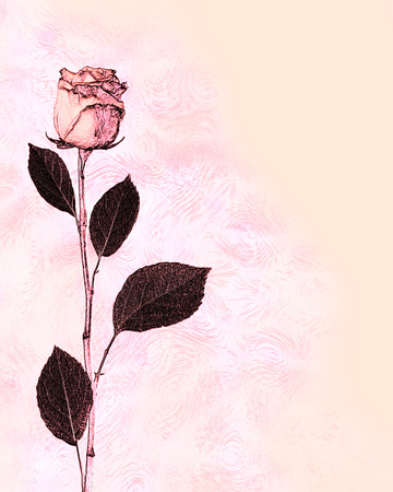 vegetate: abstract illustration flower  rose