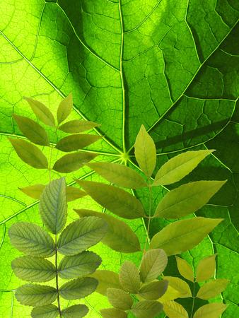 vegetate: garden leaves on green floral background
