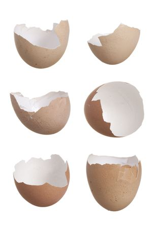Study of six broken egg shells photo