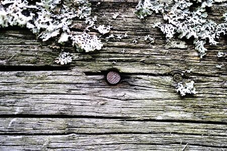 rusty iron nails in an old wooden peeling surface Stock Photo