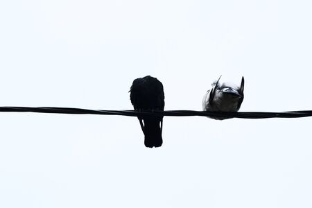 birds pigeons on wires on a light background freeze in cold autumn weather. Zdjęcie Seryjne