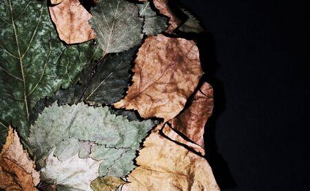 herbarium autumn leaves on a dark background. Still life