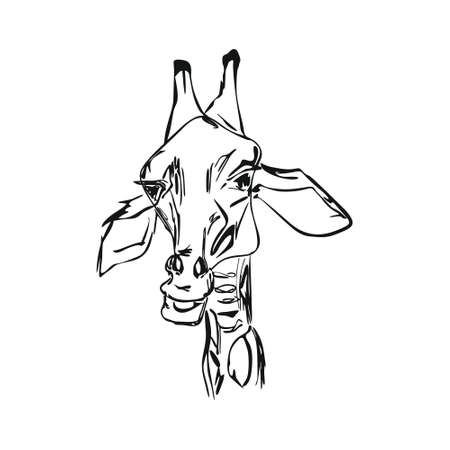 the head of a giraffe sketch graphics black and white drawing  イラスト・ベクター素材