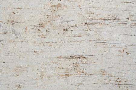 white birch bark macro background texture,