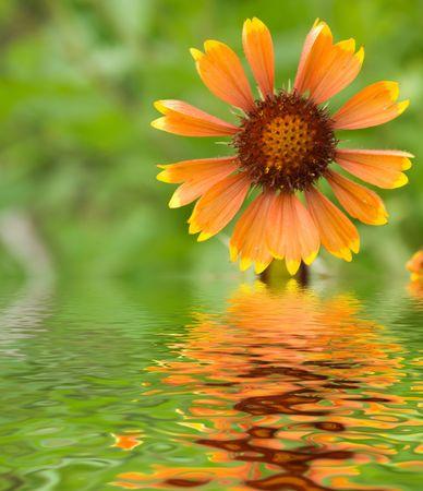 Fiori in una riflessione del witn del giardino